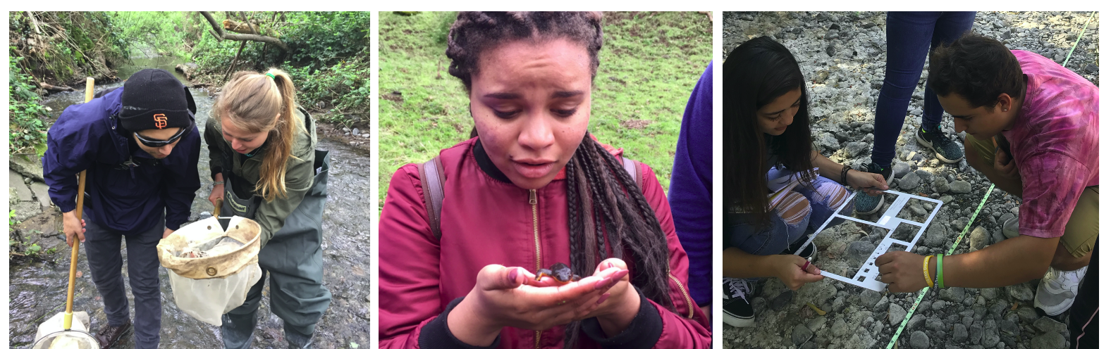 L to R: Two students peering into a dipnet; a woman holding a newt; two students measuring gravel in a dry creek bed